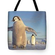 Emperor Penguin Aptenodytes Forsteri Tote Bag by Tui De Roy