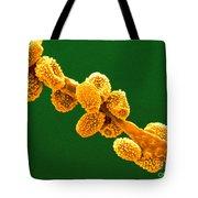 Eurotium Spores Tote Bag