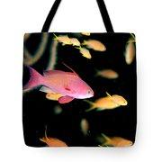 Fiji, Reef Scene Tote Bag