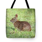 Florida Marsh Rabbit Tote Bag