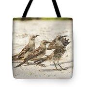 Galapagos Hood Mockingbird Tote Bag