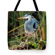 Great Blue Heron Tote Bag by Matt Suess