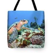 Hawksbill Turtle Feeding On Sponge Tote Bag by Karen Doody