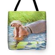 Hippopotamus  Tote Bag