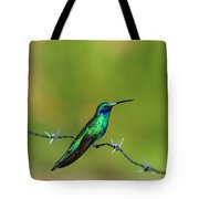 Hummingbird On Barbed Wire Tote Bag
