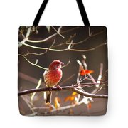 Img_0001 - House Finch Tote Bag