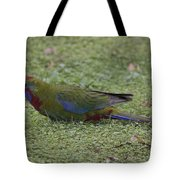 Juvenile Crimson Rosella Tote Bag