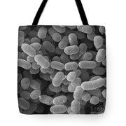 Lactobacillus Sakei, Sem Tote Bag