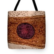 Leydig Cell, Tem Tote Bag