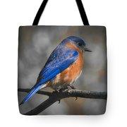 Male Eastern Bluebird Tote Bag