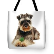 Miniature Schnauzer Tote Bag by Jane Burton