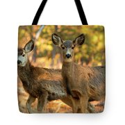 Mule Deer In The Woods Tote Bag