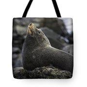 New Zealand Fur Seal Tote Bag