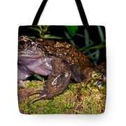 Noras Spiny Chest Frog Tote Bag