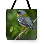 Northern Parula Tote Bag