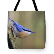 Nuthatch -- Tote Bag