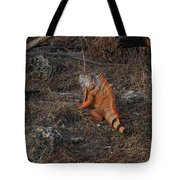 Orange Iguana Tote Bag