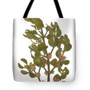 Pacific Mistletoe Tote Bag