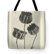 Plant Studies, 1928, Nature Series, By Karl Blossfeldt  Tote Bag