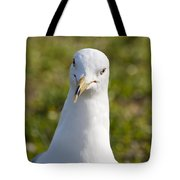 Ring Billed Gull Tote Bag