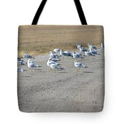 Ring Billed Gulls  Tote Bag