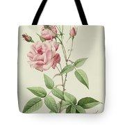 Rosa Indica Vulgaris Tote Bag