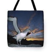 Salvins Albatross At Sunset Tote Bag
