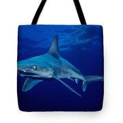 Sandbar Shark Tote Bag