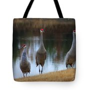 Sandhill Crane Family By Pond Tote Bag