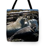 Sea Lions At Sea Lion Cove State Marine Conservation Area Tote Bag