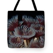 Social Feather Dusters Tote Bag