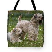 Soft-coated Wheaten Terriers Tote Bag