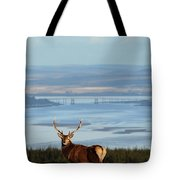 Stag Overlooking The Beauly Firth And Inverness Tote Bag