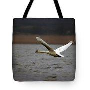 Swan During Take Off Tote Bag