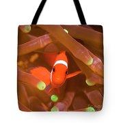Tropical Fish Clownfish Tote Bag