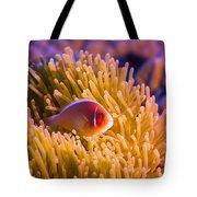 Tropical Fish Pink Clownfish Tote Bag