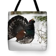 Western Capercaillie Tote Bag