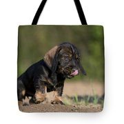 Wire-haired Dachshund Puppy Tote Bag
