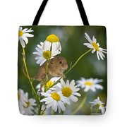 Young Eurasian Harvest Mouse Tote Bag