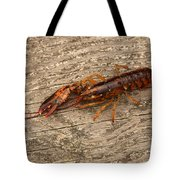 Young Lobster Tote Bag