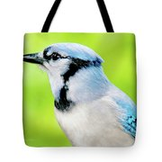 Blue Jay, Animal Portrait Tote Bag