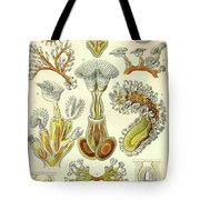 Vintage Zoological Tote Bag