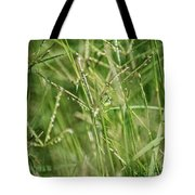 2008 Grasshopper In Green 'can You See Me...' Tote Bag