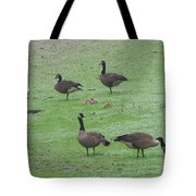 2016-canadian Geese And Babies Tote Bag