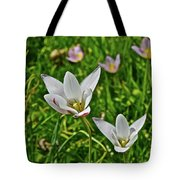 2016 Early May Meadow Garden Lady Jane Tulip Tote Bag
