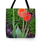 2016 Early May Tall Red Tulips Tote Bag