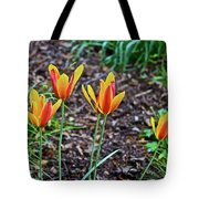 2016 Mid May Meadow Garden Tulips Tote Bag