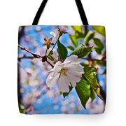 2016 Olbrich Cherry Blossoms 2 Tote Bag
