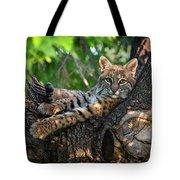 In A Lurch - Bobcat 8 Tote Bag