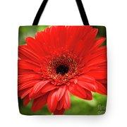 Red Gerber Tote Bag